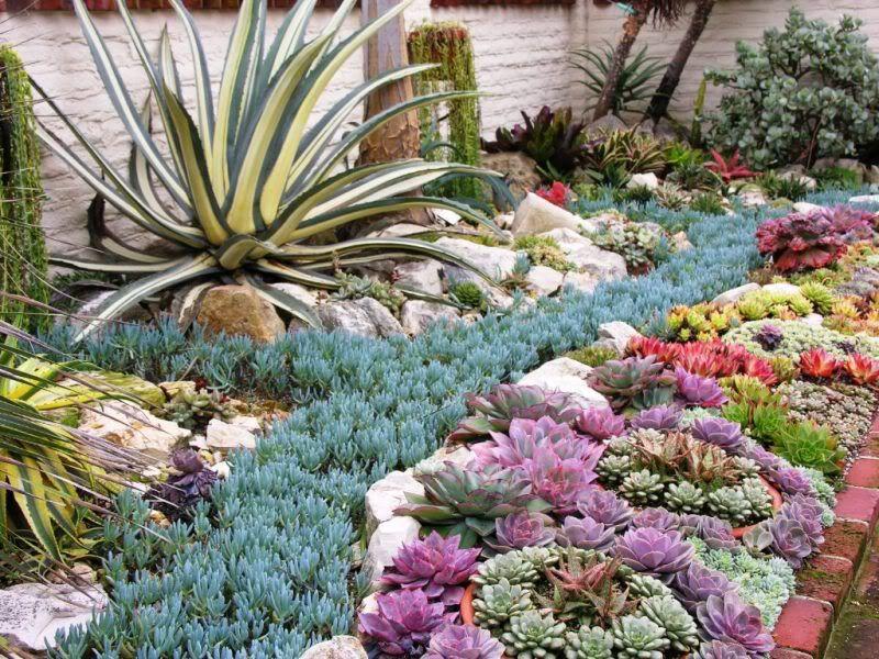 25 Best Ideas About Succulent Landscaping On Pinterest