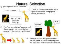 worksheet. Evolution By Natural Selection Worksheet ...