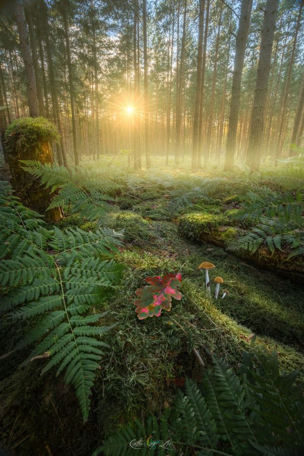 Enchanted Forest 500px  Beautiful Pinterest