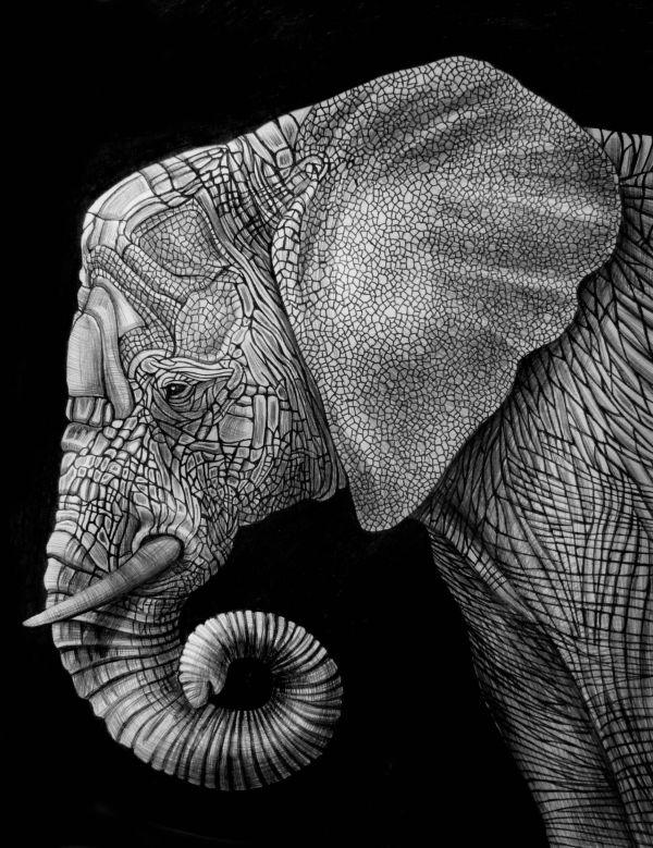 Elephant Ink Illustration