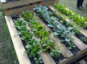 Pallet Gardening Pallets Can Be Recycled And Used In A Whole New