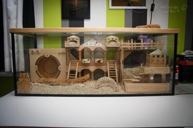 hamster terrarium  Google zoeken  Hamster  Pinterest