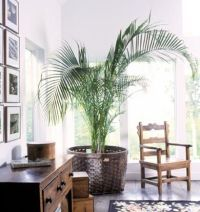 British Colonial Style on Pinterest | Tropical decor ...