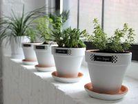 Modern + White + Minimalist: Easy Windowsill Herb Garden ...