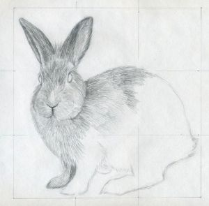 easy drawing rabbit pencil drawings faces draw cartoon simple sketches animals amazing bunny charcoal cartoons