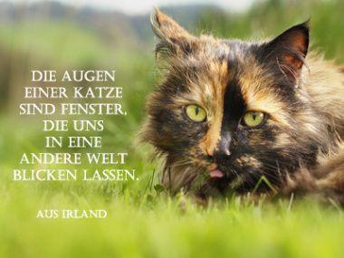 Katzen Sprche  Katzen Gedichte  Kurze Sprche Zitate