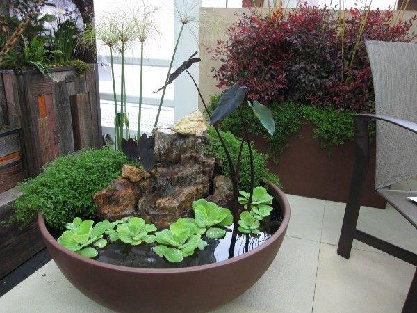 Creative Indoor Gardening Plants Rock Water Arrangement Low