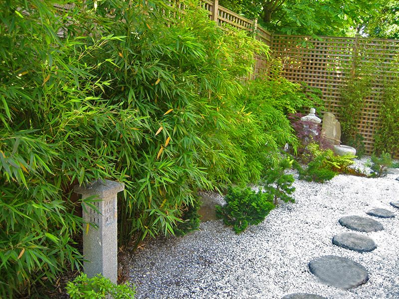 Japanese Garden Ideas Plants strikingly design ideas zen garden plants imposing decoration zen garden creation the main elements of japanese Japanese Garden Ideas Plants