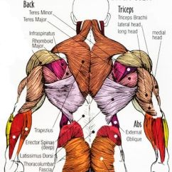 Lower Back Exercises Diagram Doorbell Wiring 2 Bells Human Body Muscle Anatomy View Pain