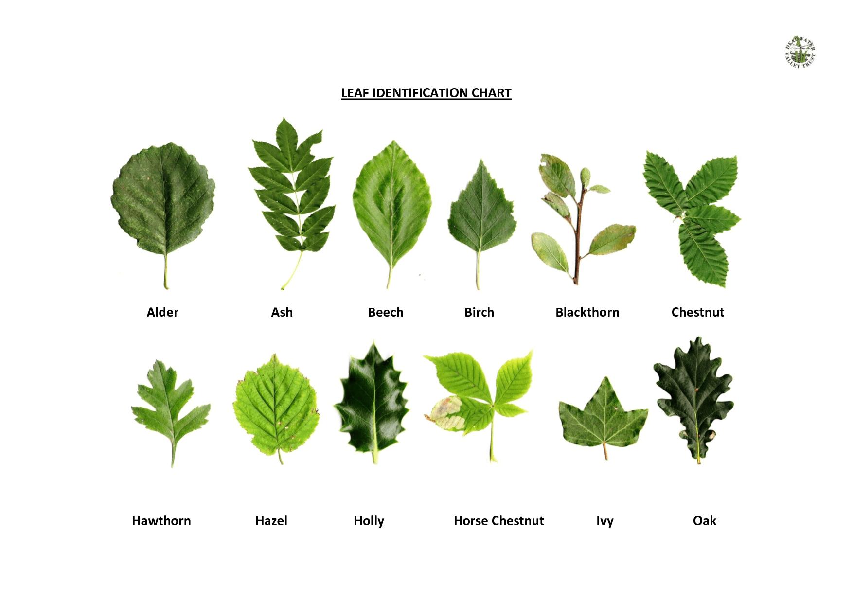 Native Oklahoma Identification Plants