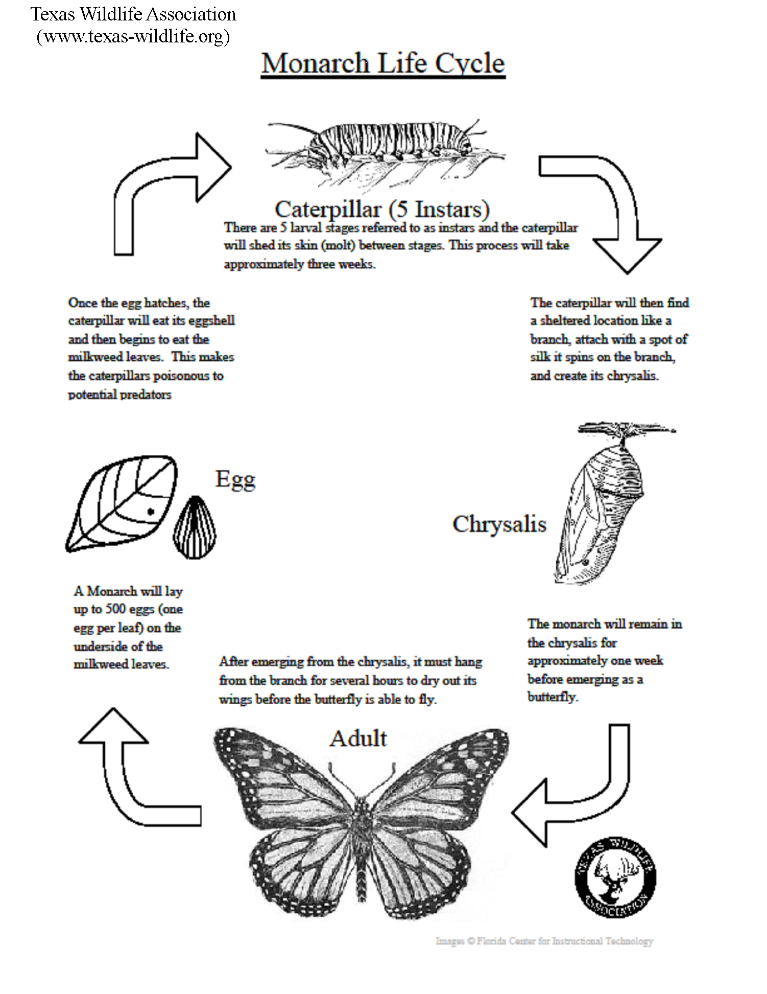 Monarch Butterfly Life Cycle Lesson