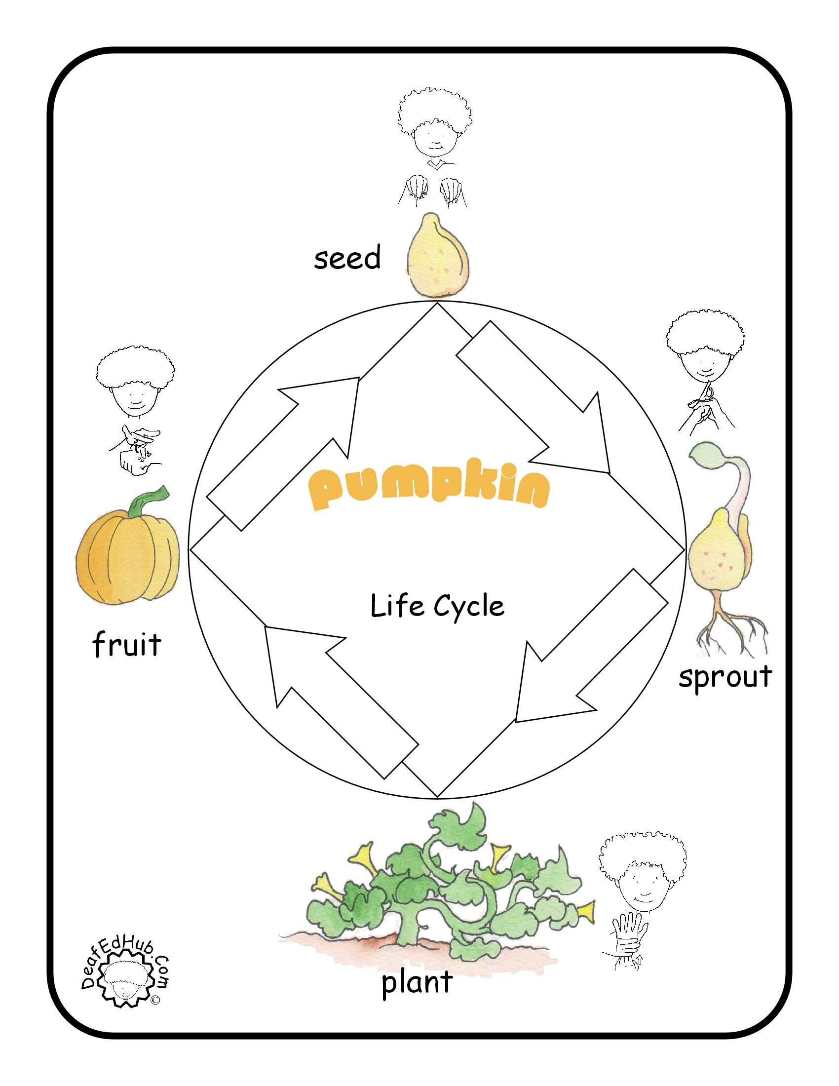 parts of a pumpkin diagram wiring trailer plug 7 pin asl poster lifecycle science pinterest