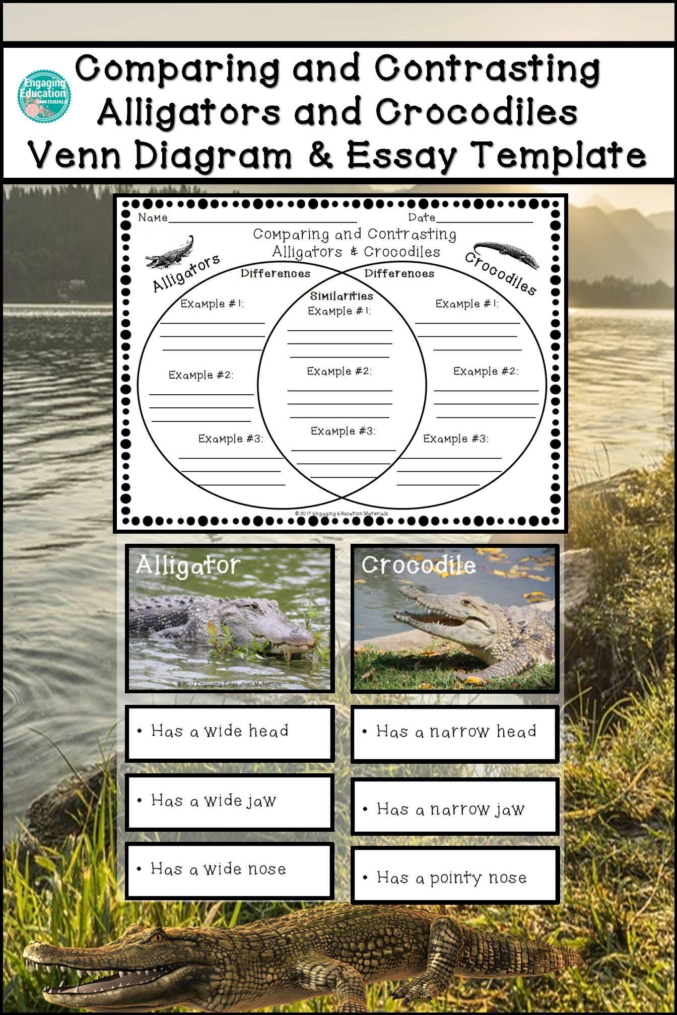 compare and contrast using venn diagram 2000 ford explorer wiring comparing contrasting alligators crocodiles
