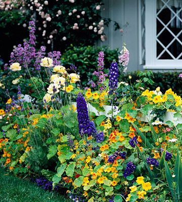 Colorful Front Yard Cottage Garden Plan Gardens Delphiniums And