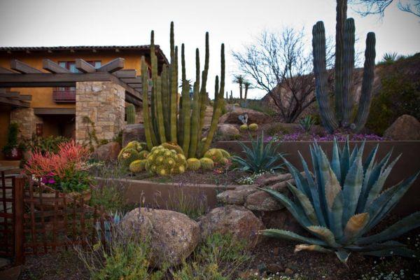 desert landscaping house front
