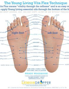 Young living vita flex technique feet reflexes foot massage healing naturally please contact me if you are interested in becoming  also https youngliving signup rh pinterest