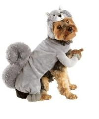 Squirrel dog costume - so wrong it's right?! It's holding ...