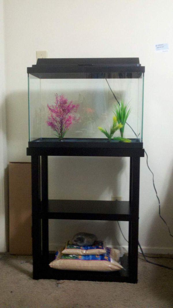 10 Gallon Fish Tank Stand Ideas Aquarium Aquariums