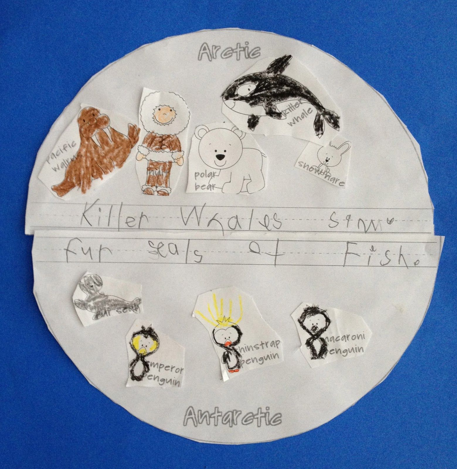 Arctic Animals Vs Antarctic Animals Sort Animals Amp Write What You Learned
