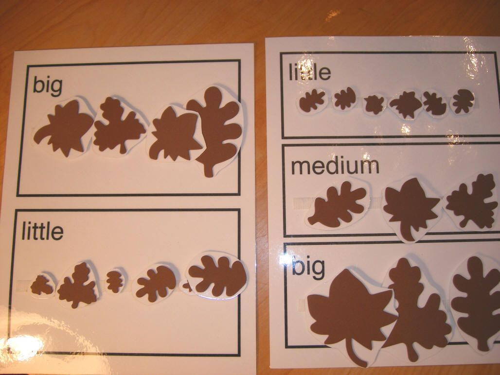 L Craft Sort Leaves By Little And Large Great Idea For Sorting Sizes In Keeping With An Autumn