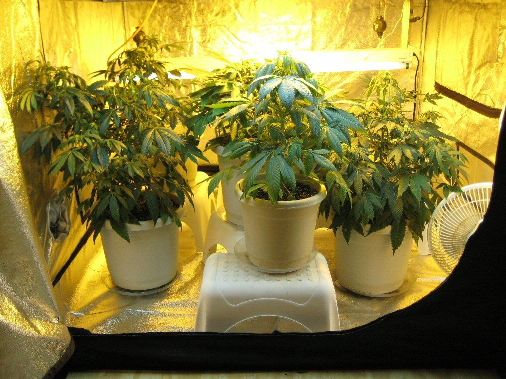 hydroponic grow tent for indoor gardening. #Why Should You