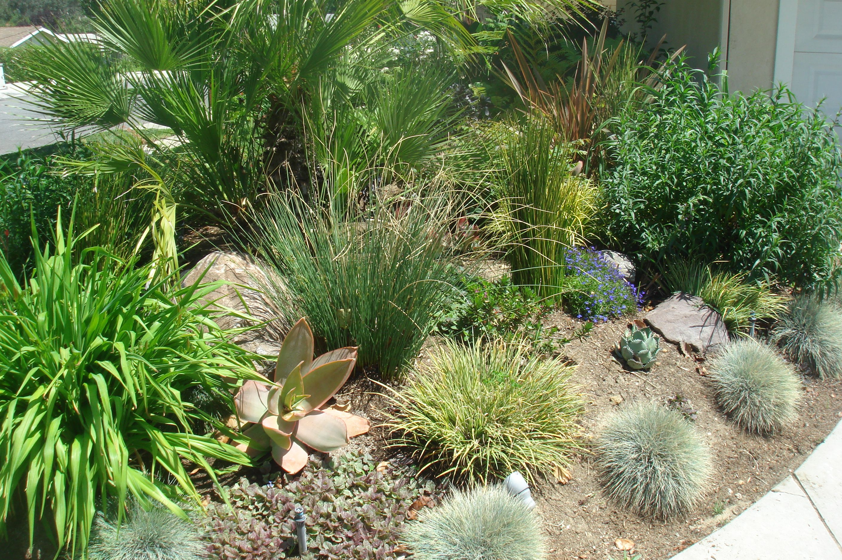 SUCCULENTS & GRASSES WORK GREAT IN MOST LANDSCAPES Landscape