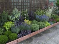 Low Border Plants | plants are an important part of any ...