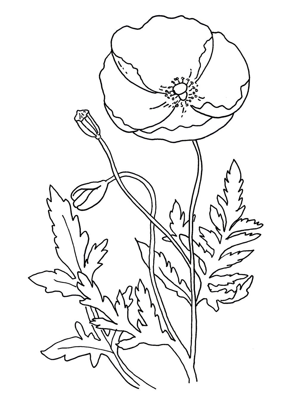Free Coloring Pages Coloring Poppy Images Free Remembrance New On