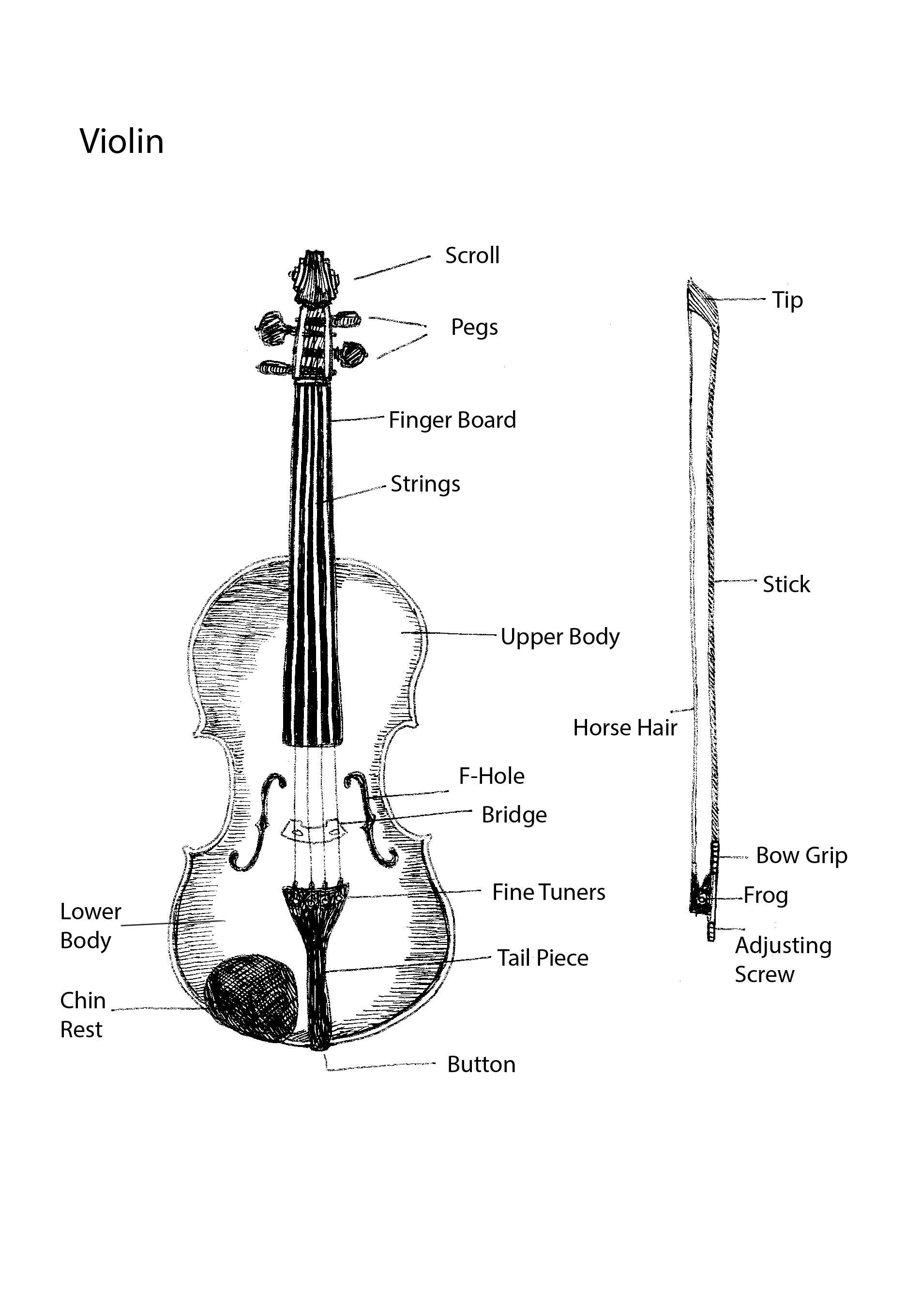 Violin Parts And Printable Diagram