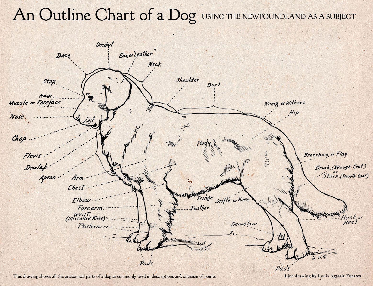 dog bone diagram baja designs wiring here 39s an awesome anatomy random photos