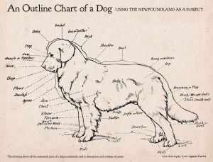 Here's an awesome dog anatomy diagram! | Random Photos