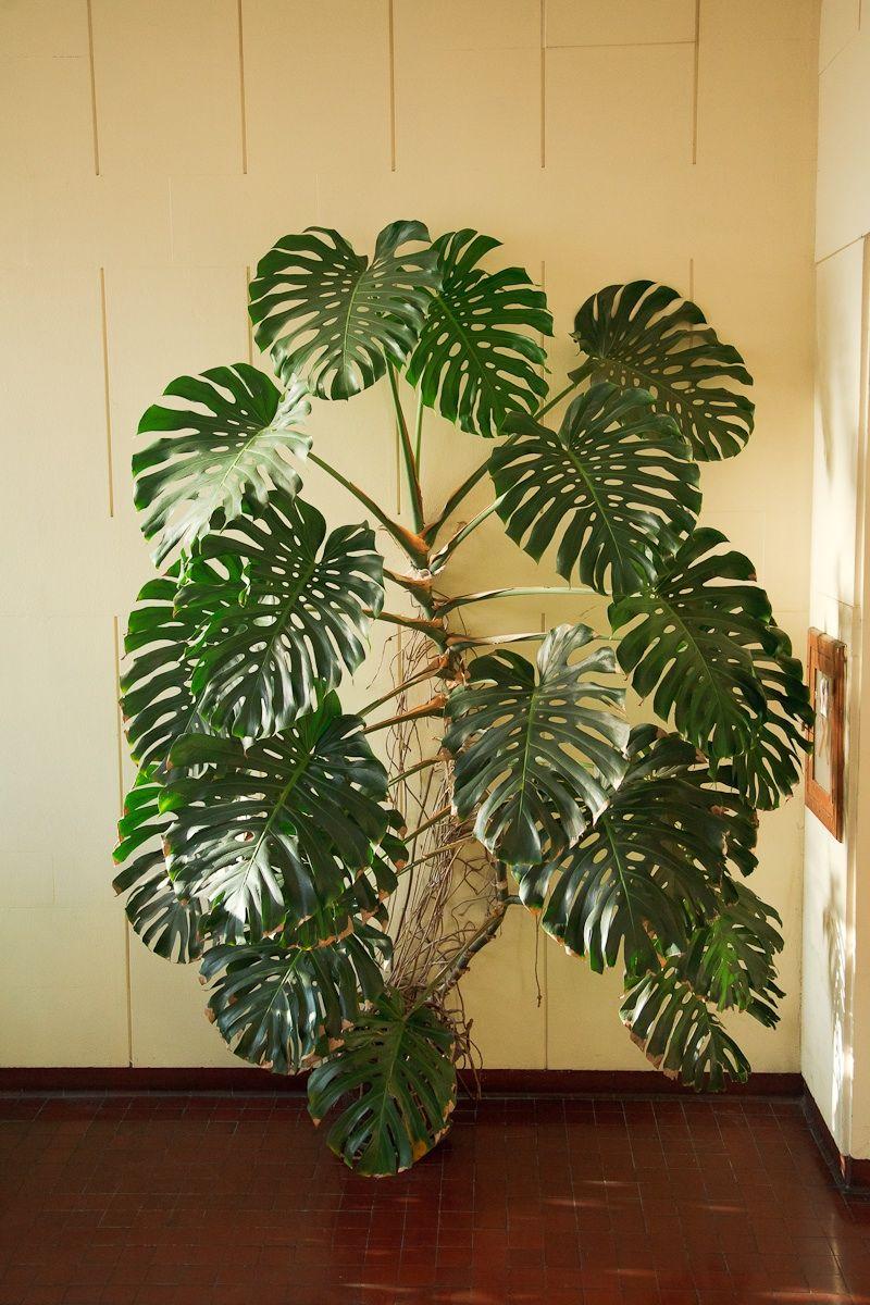 Indoor Plant Decorating Ideas INDOOR PLANTS IDEAS House Plants