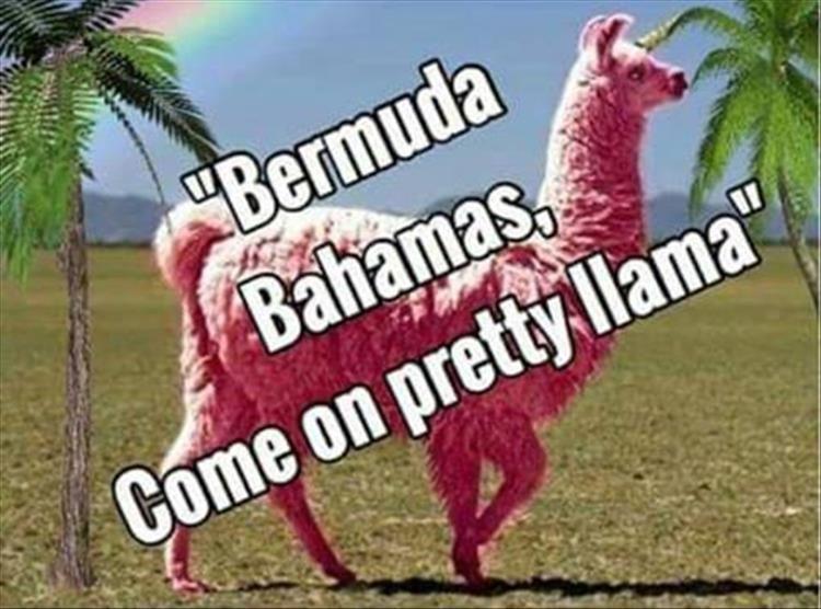 Llama Song Lyrics