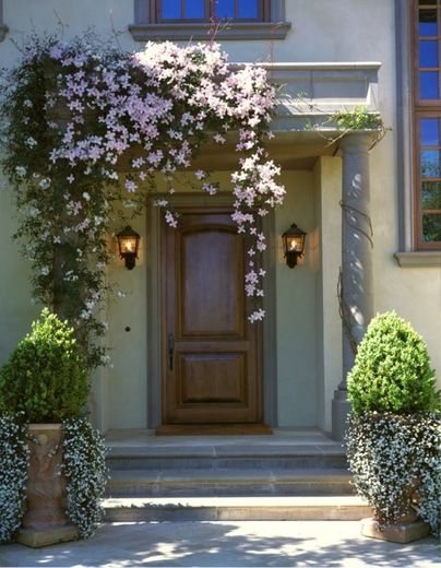 Garden Ideas Climbing Vines Clematis Montana Sweet Alyssum