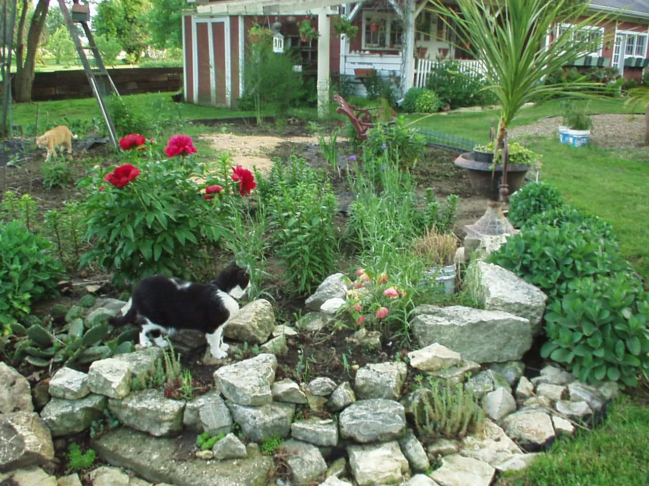 Rock Garden Design Ideas Small Rock Garden Ideas Need Ideas