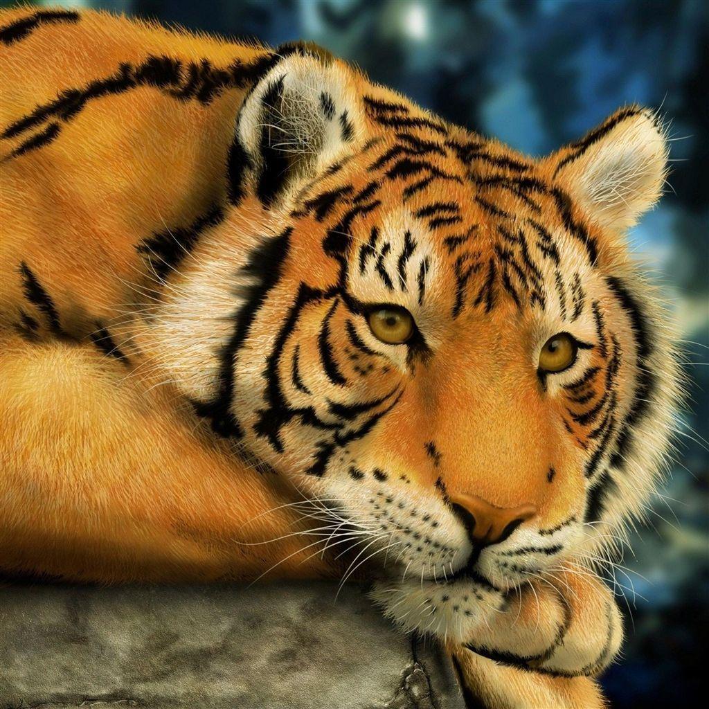 big lazy tiger #retina #ipad #air #wallpaper | retina ipad