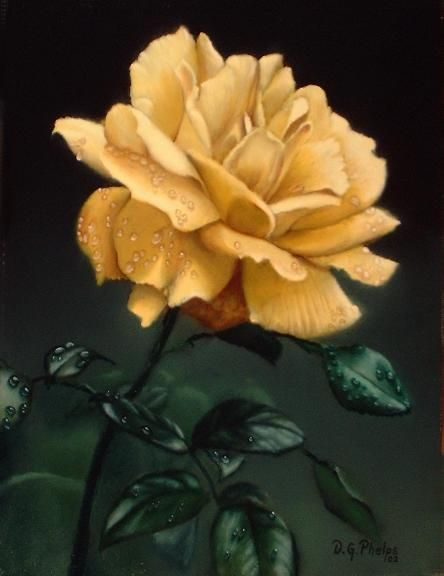 History Of The Rose, The Worlds Most Famous Flower