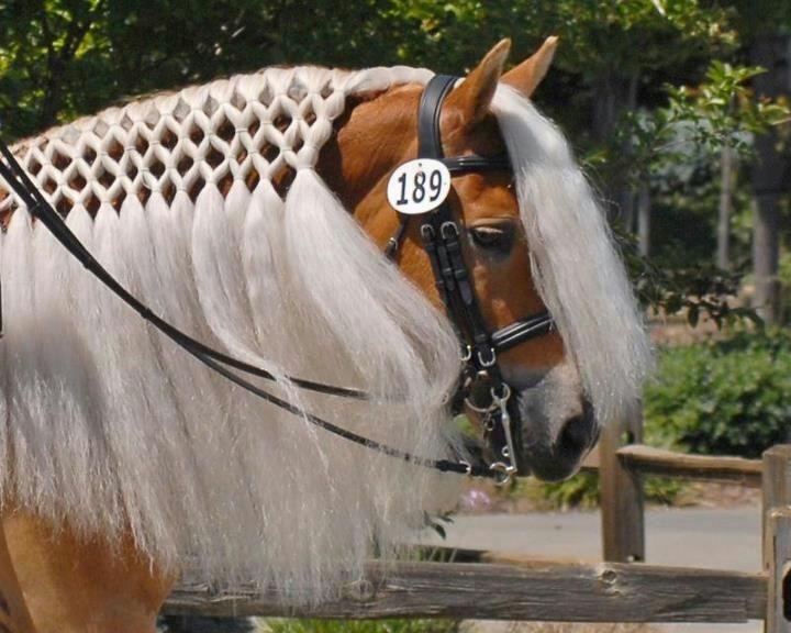 Pferde Frisuren Fr Lange Mhne  Frisur