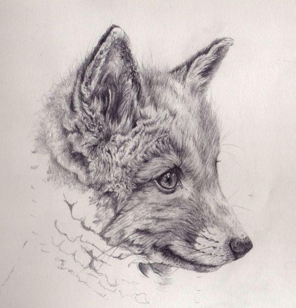 Fox Cub Mechanical Pencil Drawing Akdizzle.deviantart
