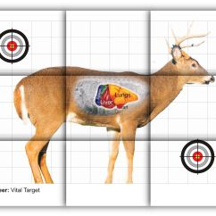 Whitetail Deer Vital Area Diagram 230 Volt 3 Phase Wiring Vitals Target Free Printable Shooting Targets