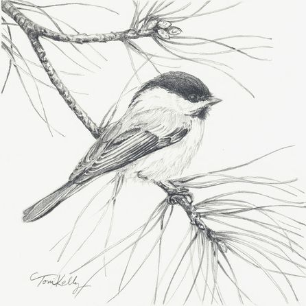 Christmas Chickadee by Toni Kelly graphite on watercolor