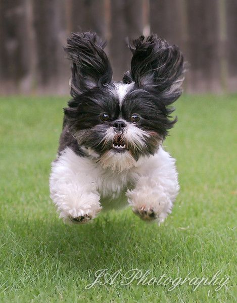 Make Me Laugh Dogs
