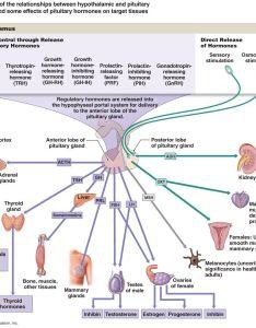 Hormone flow chart also endocrine system pinterest rh