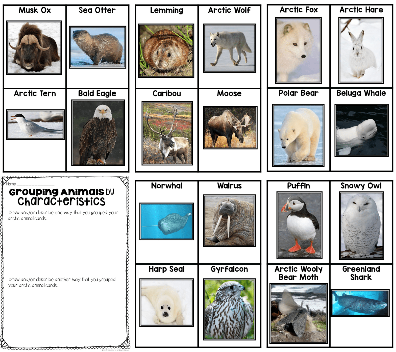 Arctic Animal Cards Great For Sorting And Classifying