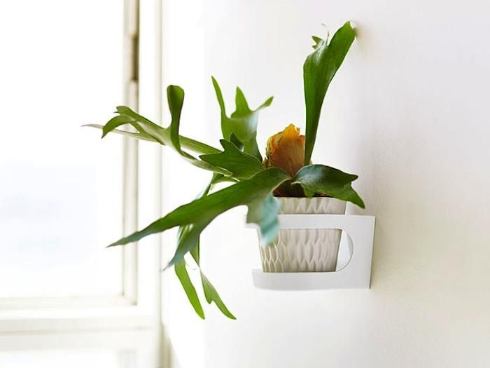 Indoor Wall Mounted Plant Holders