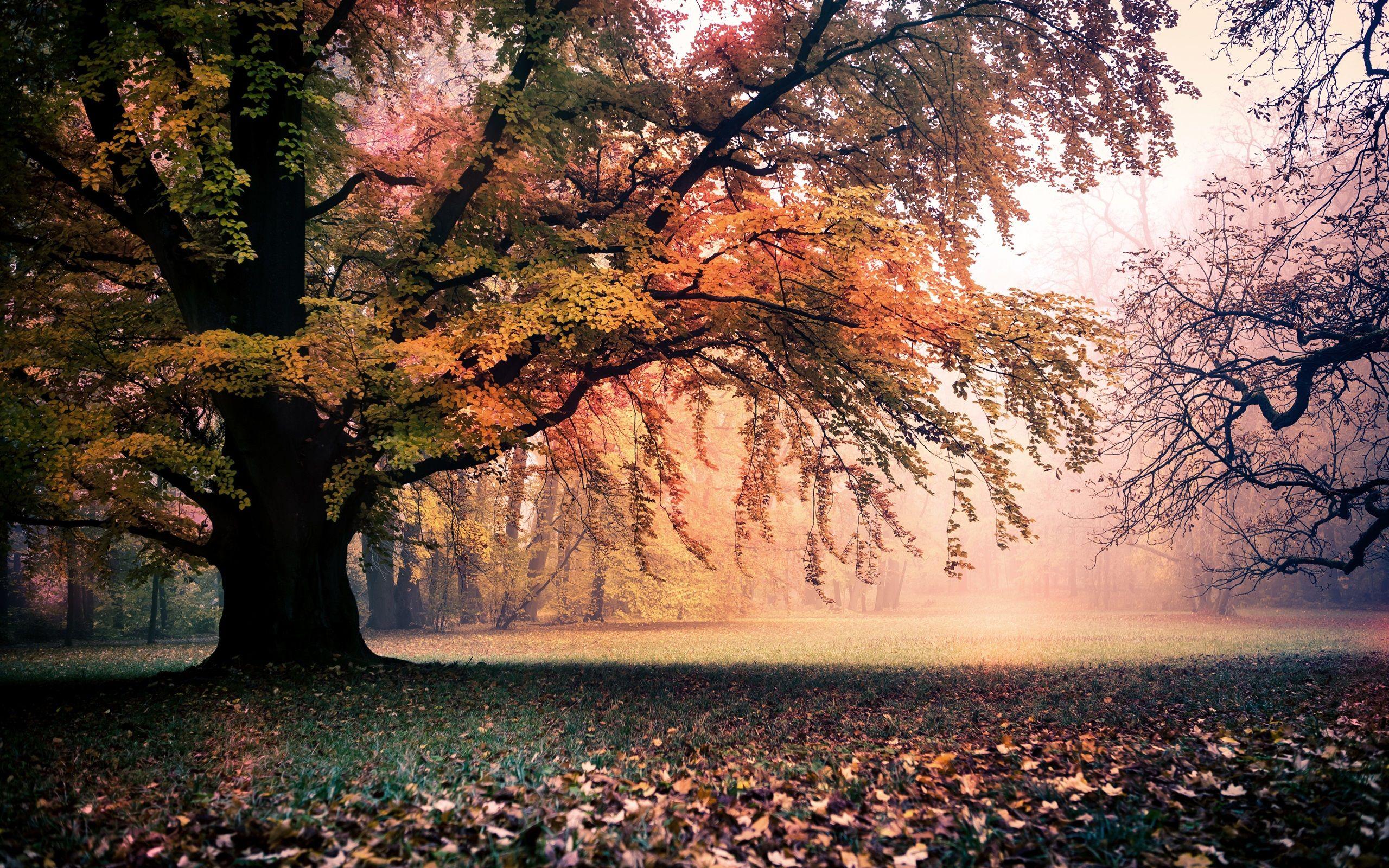 Hello Fall Wallpaper Macbook Pro Afbeeldingsresultaat Voor Autumn Landscape Landschap