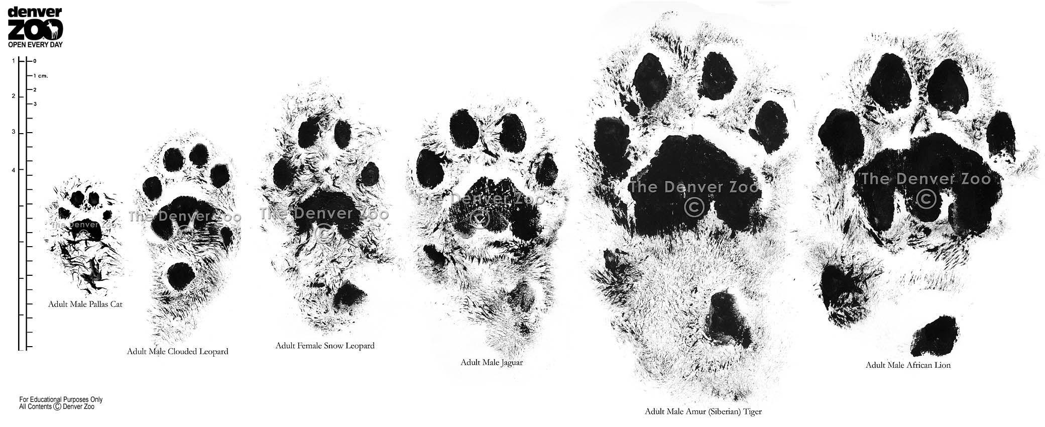Cat Comparison Large 850
