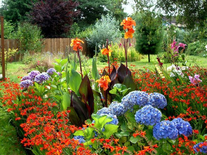 Colorful Canna lilies hydrangeas asiatic lilies