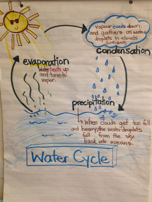 Science Water Cycle Anchor Chart