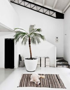 Nine refreshing ways to use plants in the home interior design ideas for bringing greenery inside great decor inspiration with potted houseplants also apartment milan         house interio rh za pinterest
